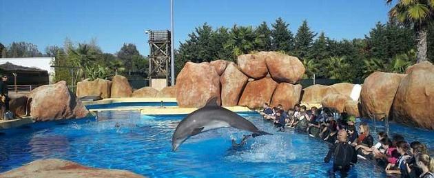 colonies de vacances mon ami dauphin 419 2 Pour ou contre envoyer son enfant en colonies de vacances ?